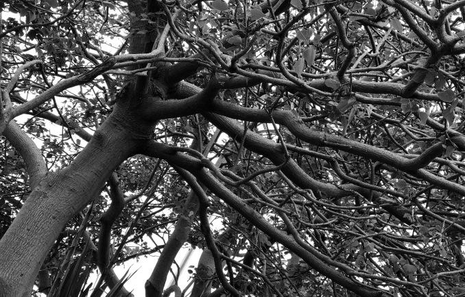 Tree - stevestillstanding
