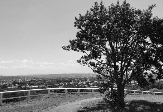 Tree View - stevestillstanding
