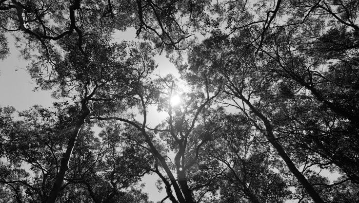 Sunlight - - stevestillstanding.com