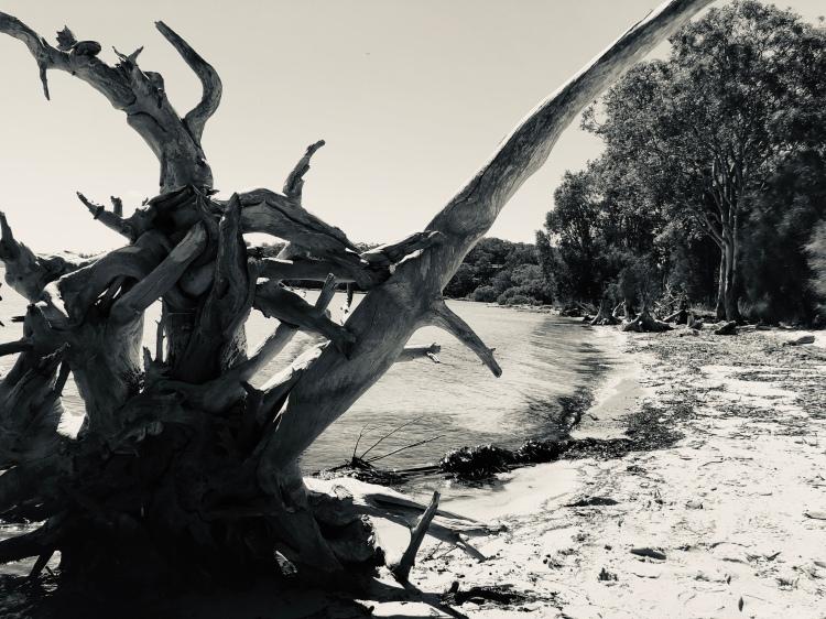 Knighted Tree - stevestillstanding.com